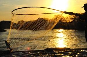 鮭漁 (2)