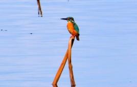 平筒沼の鳥たち