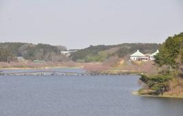 🌸桜前線🌸