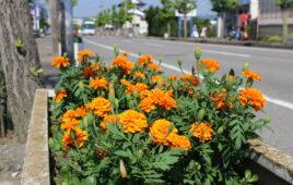 花いっぱい散歩アルバム
